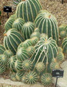 Xerophytic Plants List